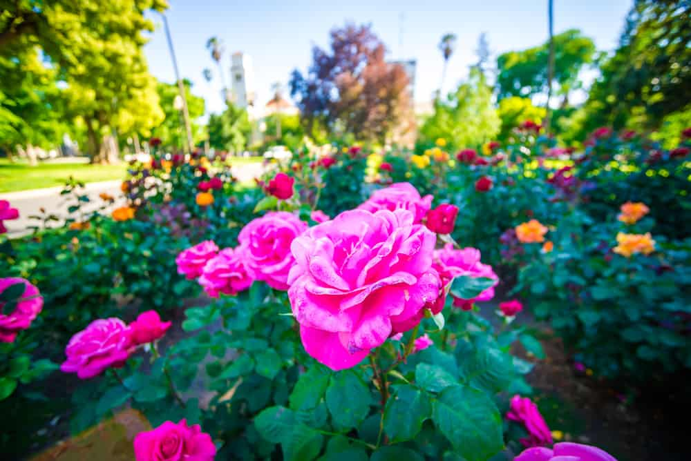 Best Gardens in Sacramento