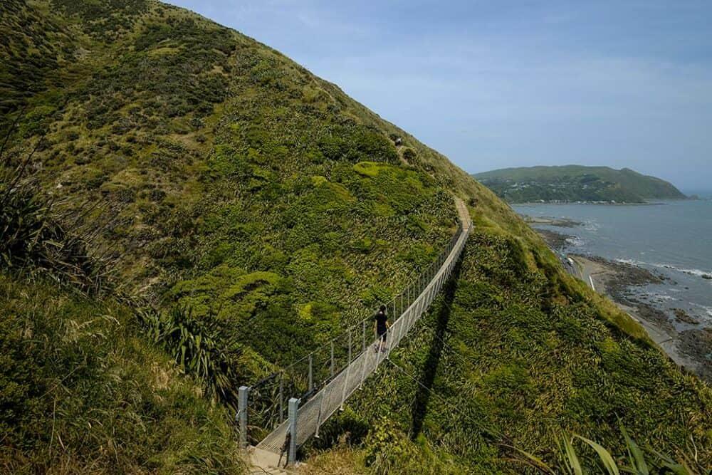 Escarpment Track Wellington