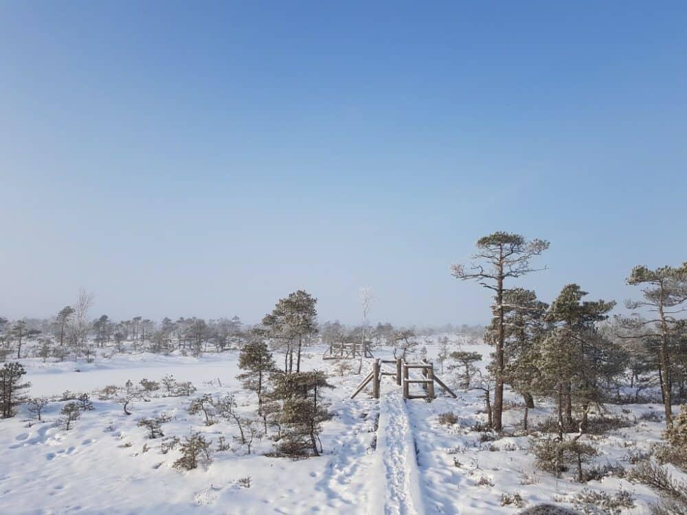 Kemeri Great Bog Winter