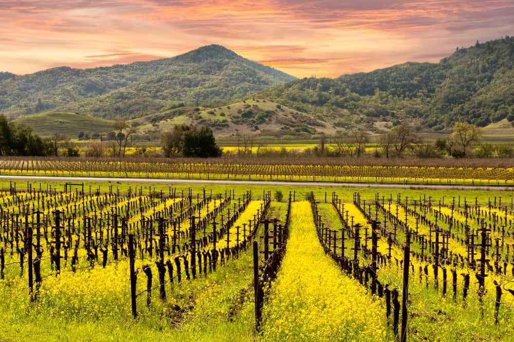 Napa Valley Springtime