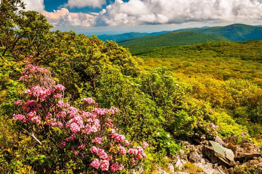 Shenandoah National Park Springtime