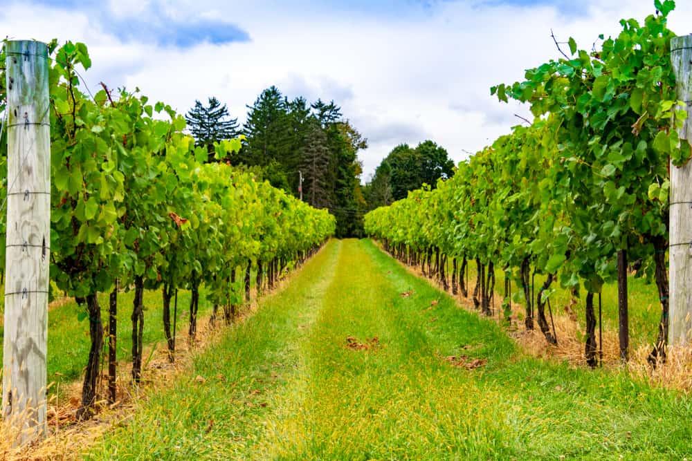 Wine tasting New Hope Pennsylvania