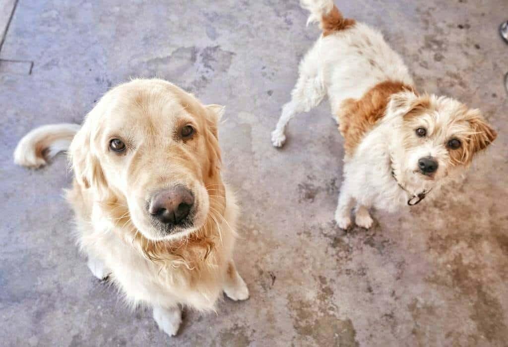 Animal Rescue, Algarve