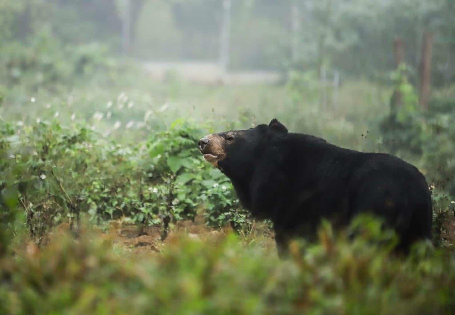 BEAR SANCTUARY Vietnam