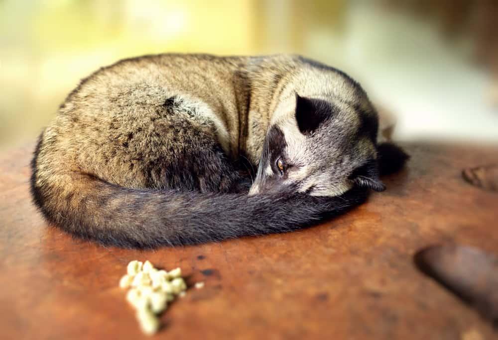 Bali Animal Welfare Association (BAWA)
