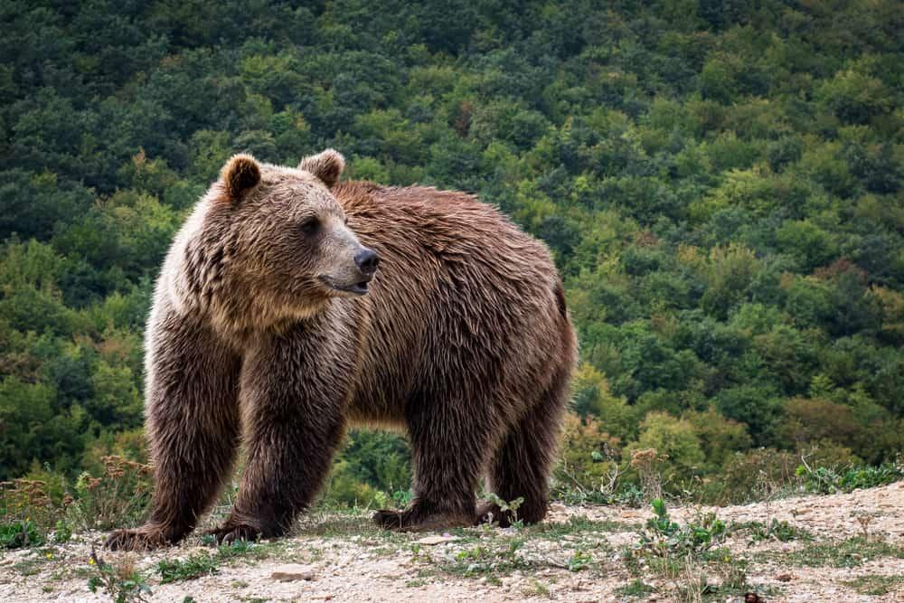 Bear Sanctuary Kosovo