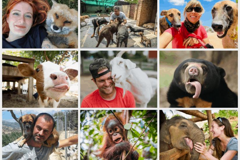 Best animal sanctuaries and rescues