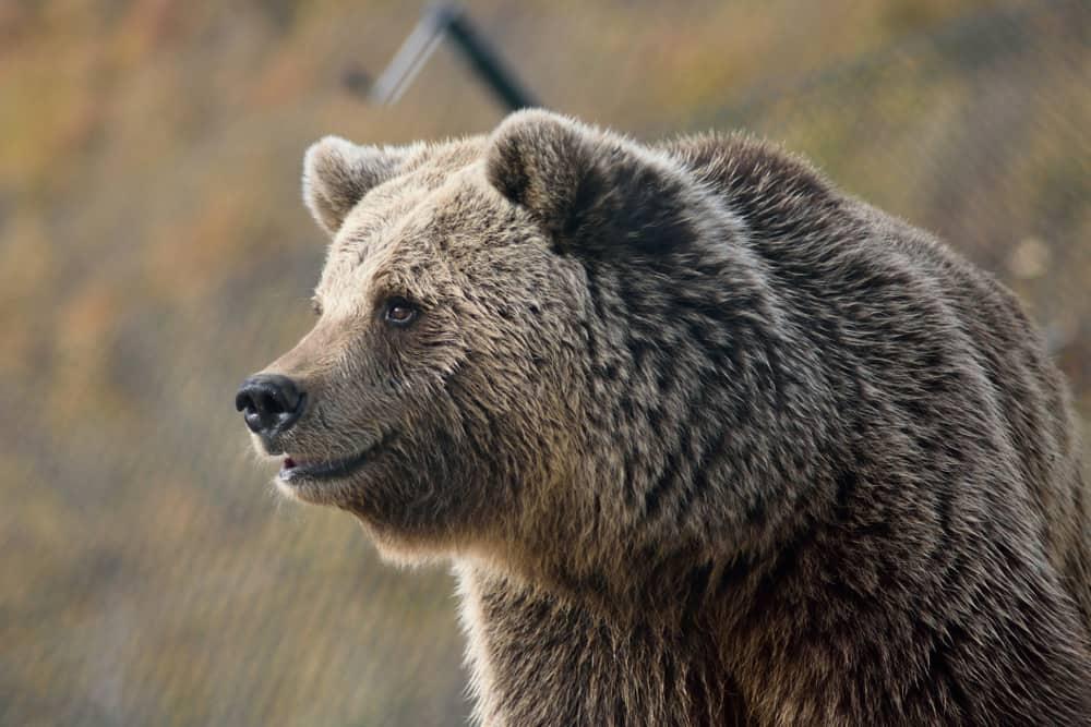Bulgaria Dancing Bear Sanctuary
