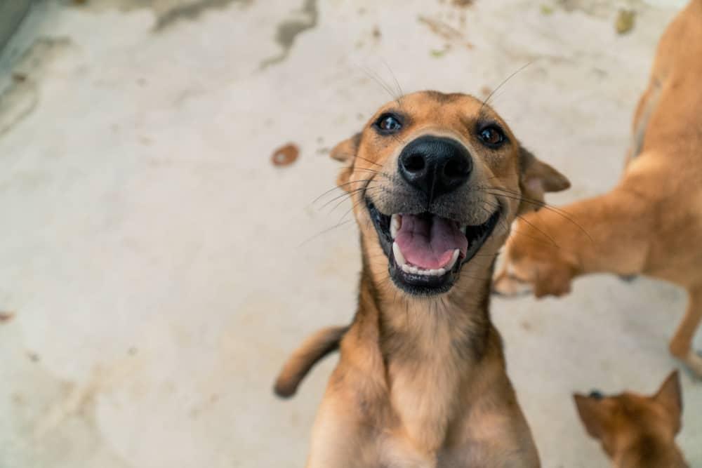 Mexico Playa Animal Rescue