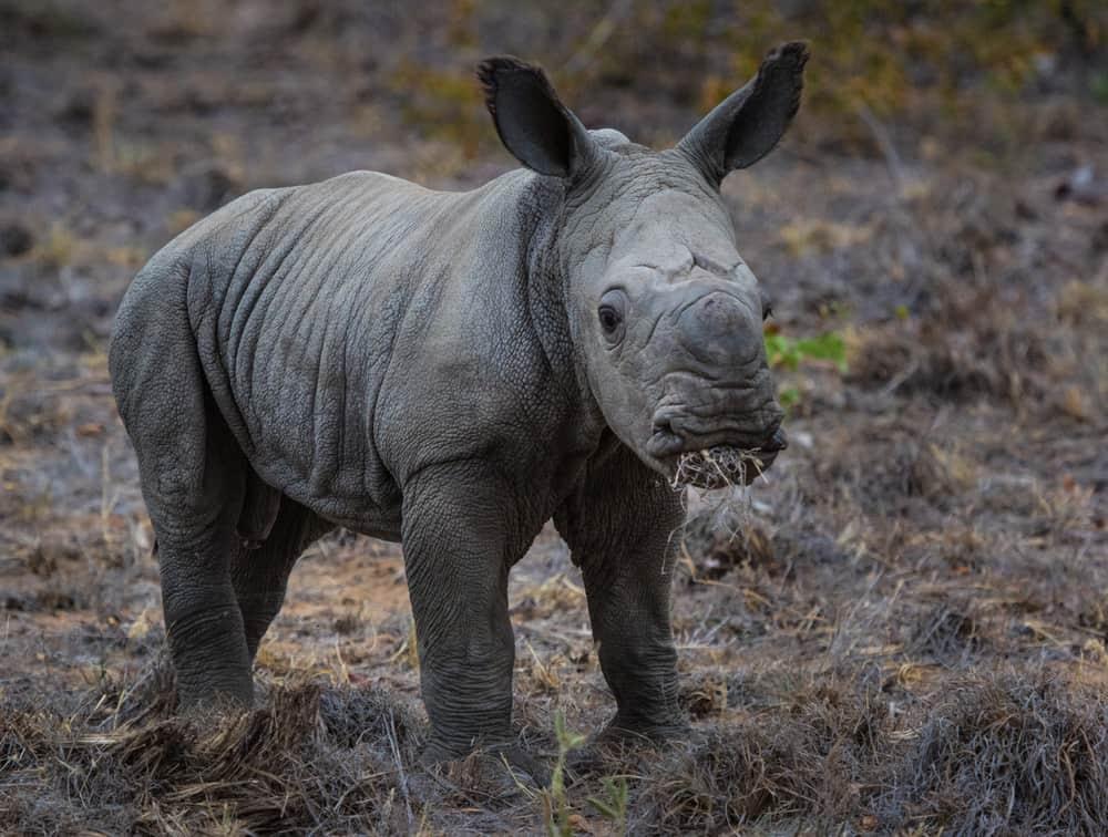 Sheldrick Wildlife Trust Kenya