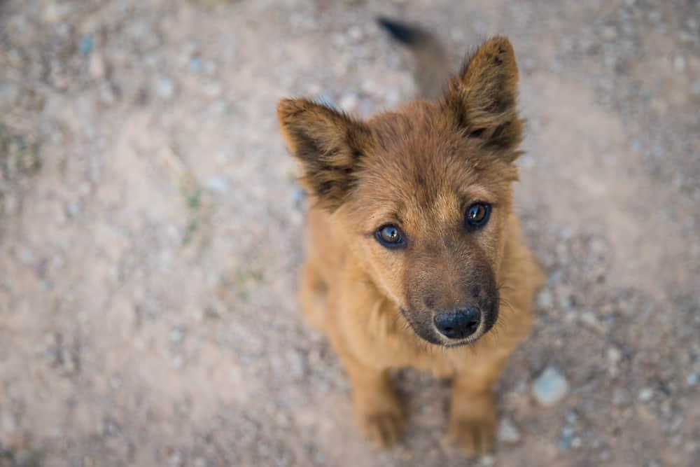 Soi Dog Foundation Foundation