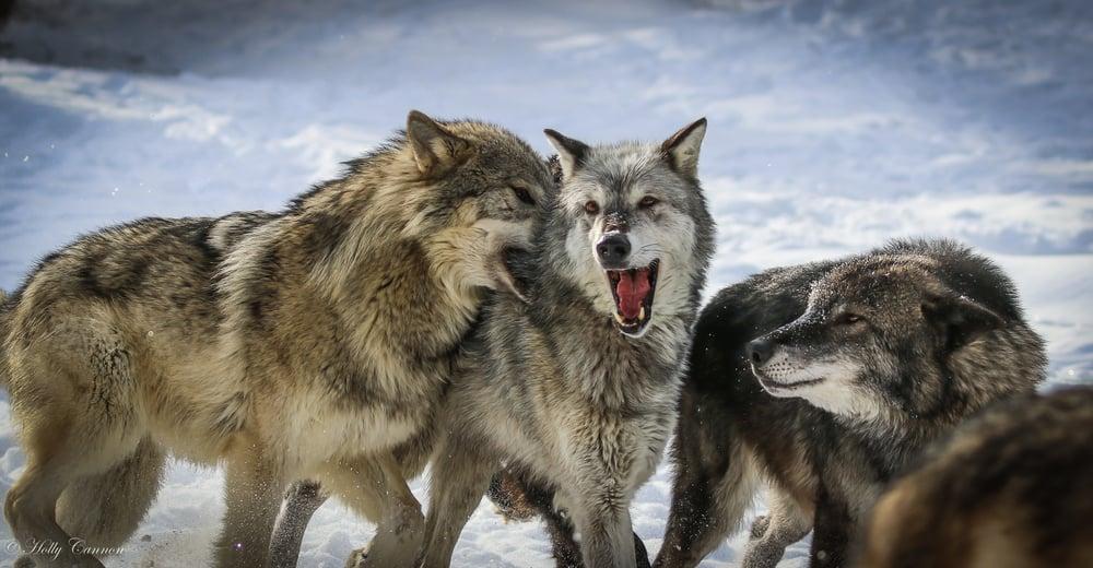 The Wild Animal Sanctuary, Colorado