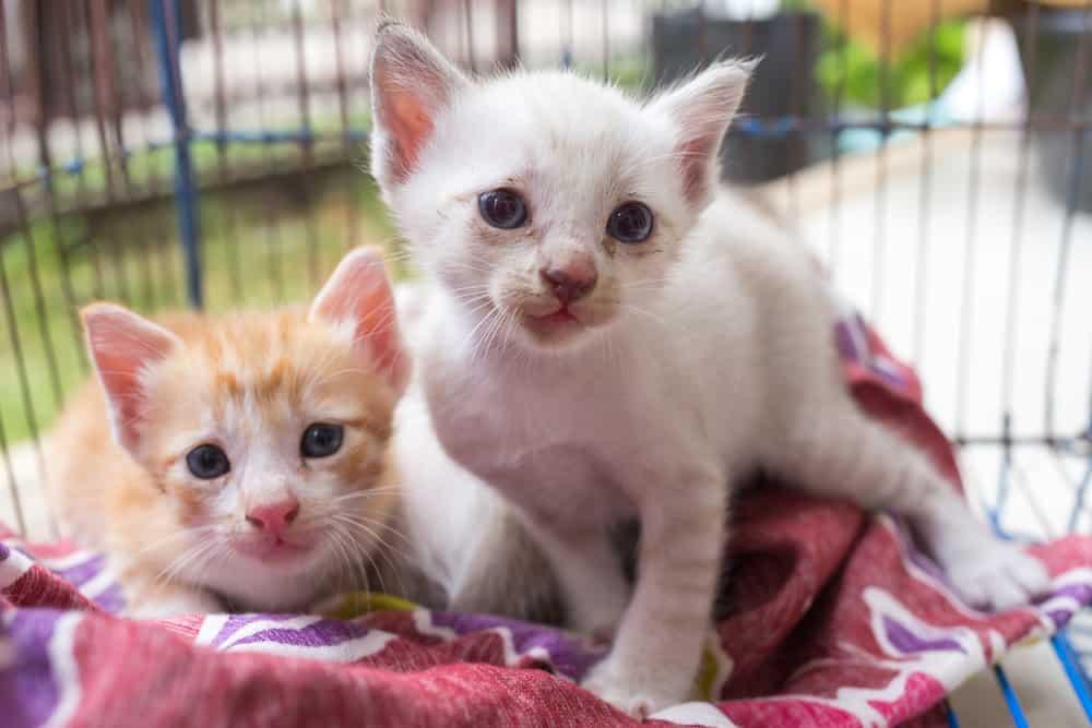 USA Florida Animal Rescue