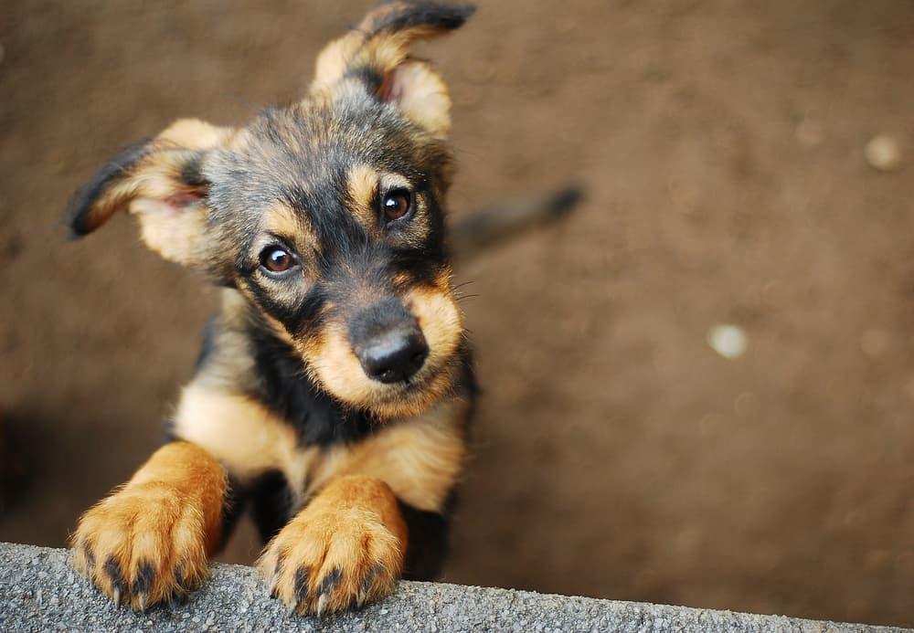 Zarkovica Animal Shelter Croatia