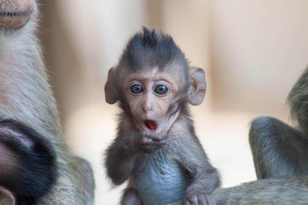 Born Free Primate Sanctuary Texas