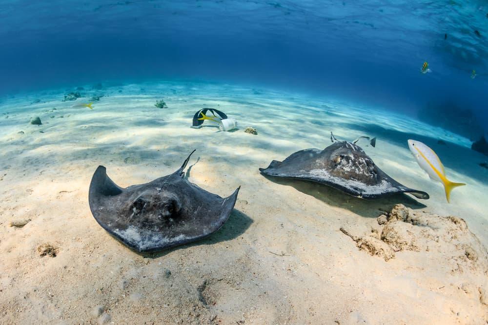 Gibbs Cay Turks and Caicos