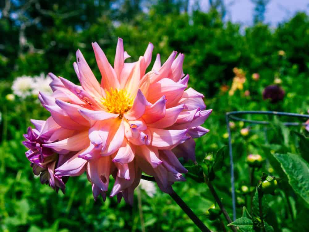 Mendocino Coast Botanical Garden