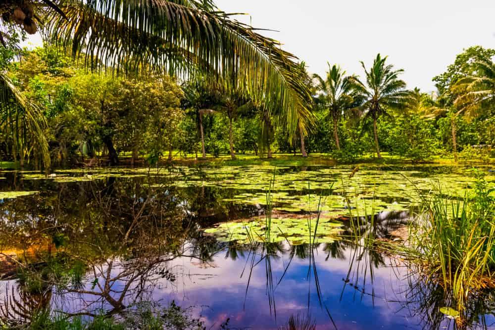 Península de Zapata National Park