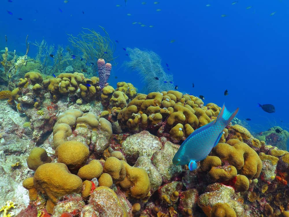 Champagne Reef Dominica