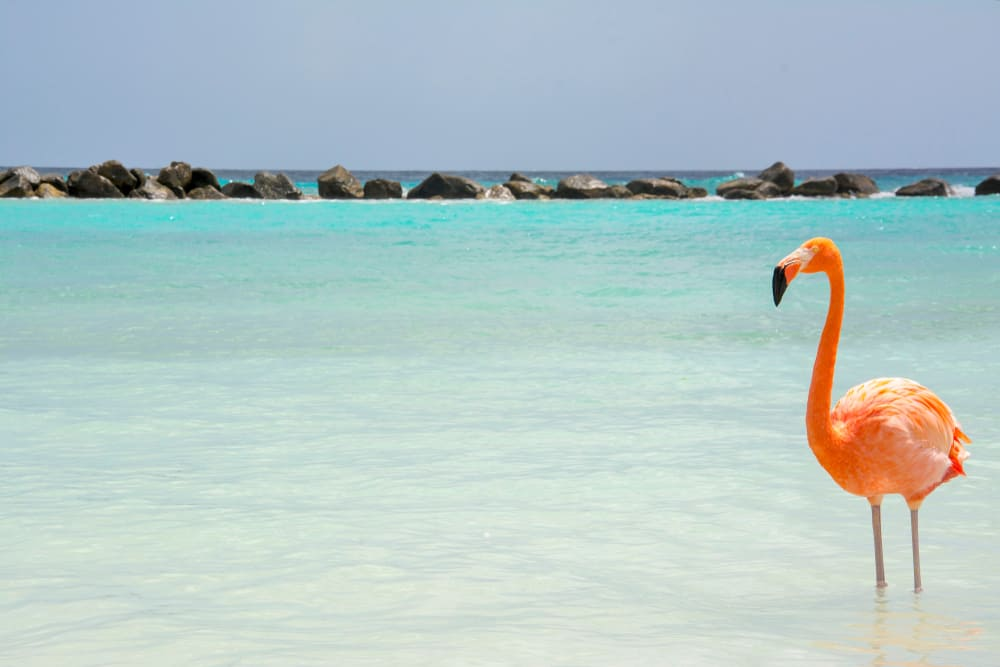 Renaissance Islands Aruba