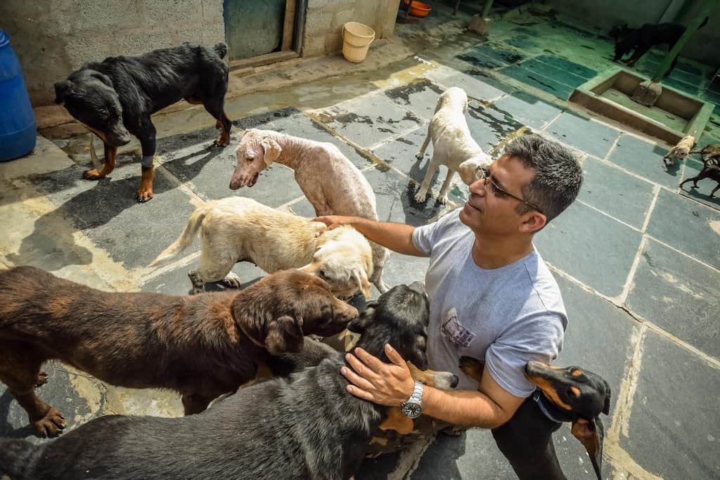 The Voice of Stray Dogs (VOSD)