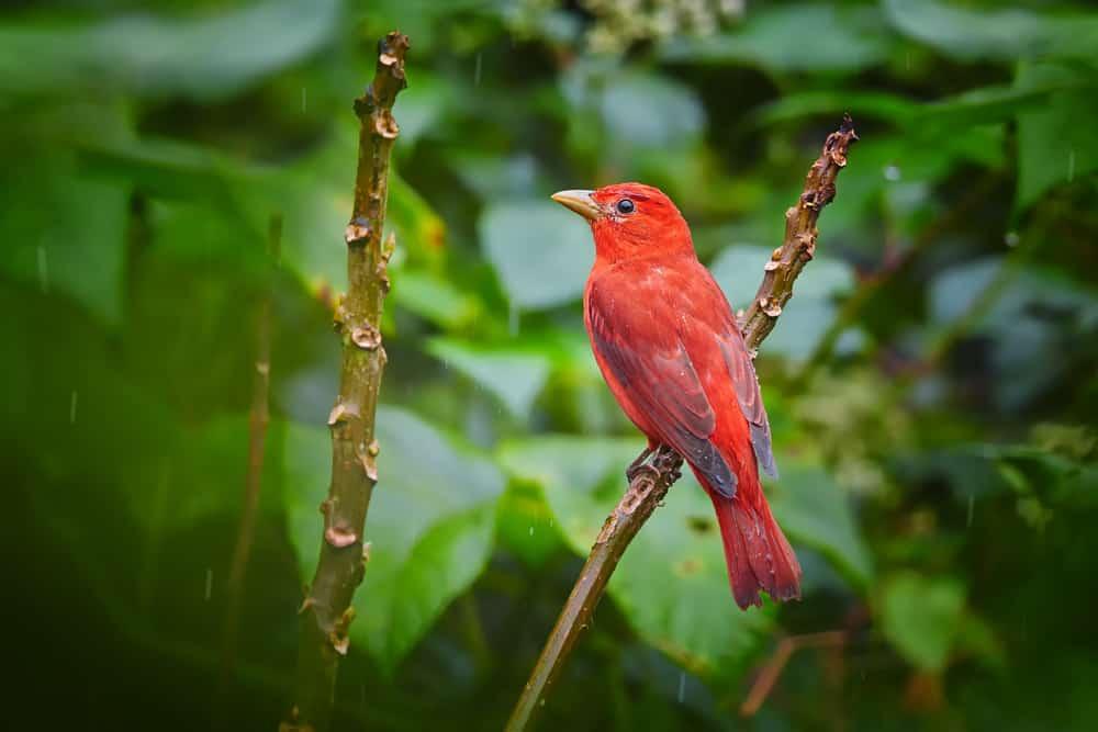 Tobago Forest Reserve