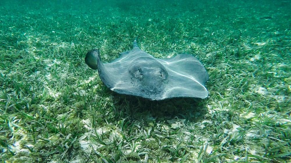 Glover's Reef Marine Reserve