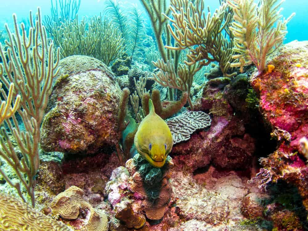 Mexico Rocks, Ambergris Caye