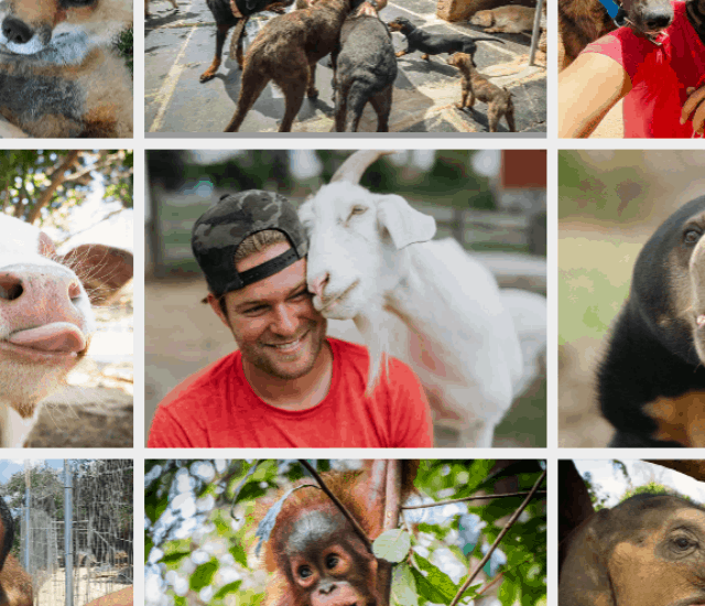 100 Of The Best Animal Sanctuaries To Visit, Volunteer Or Follow Story Poster Image